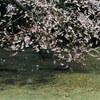 2018/03/21 春分の日、雪と桜