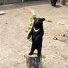 【秋田県北秋田市】「くまくま園」は予想をはるかに超えて楽しかった!!