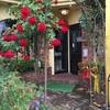 今、巴里苑の店先はバラの花が綺麗です❣️