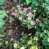 鉢植えの花を避難させ、台風に備えた 七輪まで登場