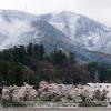 雪桜(鶴来町編)