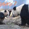 パンダのシャンシャン(香香)の所有権は中国 2年後にはお別れ