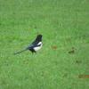 ウェールズの野鳥