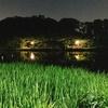 石神井公園のタウナギで初めて竿がしなった日