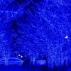 一面青い光の世界に包まれる「青の洞窟」