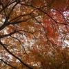 将軍塚青龍殿で紅葉と京都の街を眺める
