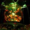 金魚の世界!「アートアクアリウム京都2017」レビュー