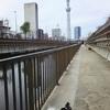 北十間川テラスを散歩
