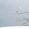 自宅から野鳥観察してみたら。