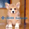 CROSS  Exchangeはなんと‼️同時に3つのキャンペーンを発表です^ ^