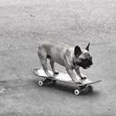 エクストリームスポーツのChill Dog