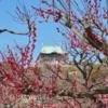 春もすぐそこ!100種以上梅の木がある大阪城公園
