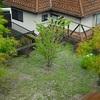 我が家の庭の観察記録㉖〜モミジの赤ちゃん成長記録〜