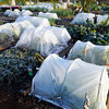 霜降りの菜園で畑の長老さまの教えを体感する