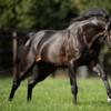 【父:キタサンブラック】2021年度キャロットクラブ募集確定馬の種牡馬別評価⑧【一口馬主】
