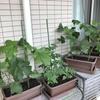 ガーデニング:異変…。※盆栽に挑戦してみました。