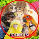 動物多頭飼いユーチューバー❤KYAPIA TV
