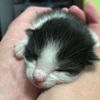 【猫のだいふく特集】Twitterでのだいふく写真ツイートまとめVol.3の巻
