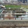 釣り堀 9回目釣行 市ヶ谷フィッシングセンター
