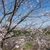 見晴らしのいい桜の園:森林研究所