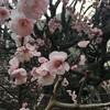 春がはじまる(初ヨガ)