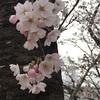 🌸今年のお花見🌸