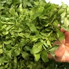 新鮮野菜(*´ω`*)