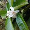 この花が咲く果物の木はな~んだ🎵