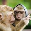 コミュニケーションが円滑になる!類人猿診断のススメ