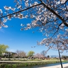 【トルコリラ円の春の挙動】4月からのトルコリラ円の動きを予想してみよう