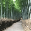 【京都】行くなら今!ゆったり歩ける京都へGo!