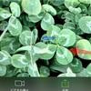 【オンライン】四つ葉のクローバーが見つかるお話会