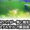 緑のコケが大量発生!!