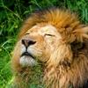 イチロー「虎やライオンは筋トレしない」発言への反論で打線組んだ
