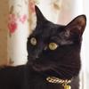 今日の黒猫モモ&白黒猫ナナの動画ー799