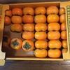 庄内柿をいただいて……いつから、柿がこんなに好きになったのだろうか
