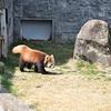 安佐動物園写真④