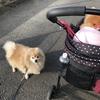 今日はお母ちゃんが頑張って公園に連れてってくれたよ(・∀・)