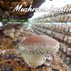 """Enjoy delicious mushrooms in Japan """"Mushroom picking"""" / Sakura mushroom garden @CHIBA"""