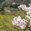 山桜と春紅葉~春の里山を彩るもの~