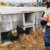 災害救助犬 entry18