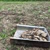 耕作放棄地の水田を畑に再生!石を拾い続ける石拾いマスター