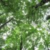 ◆'18/07/08      獅子ヶ鼻湿原&元滝②…『あがりこ大王』の方へ