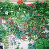 壁面飾る赤いバラ