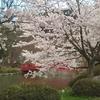 日本さくら名所100選に選ばれた長野・臥竜公園でお花見しよう【長野・須坂市】