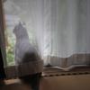 ガラス越しの猫