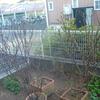 今年の庭は…1