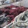 伊良部島佐良浜地区の追い込み漁・アギヤーを行う漁労集団