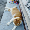侵入猫ちゃん 証拠抑えたり ペット見守りカメラ