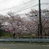 桜満開の日に彩湖~荒川CR~芝川CRへ